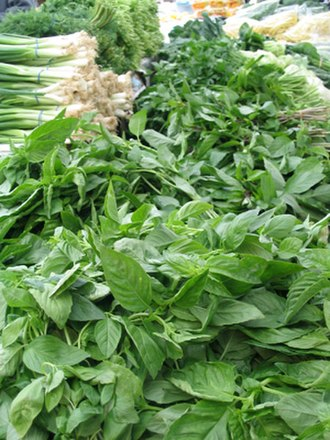 Herb - Basil and green onions, common culinary herbs