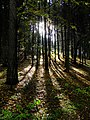 Herbstwald - Flickr - Stiller Beobachter.jpg