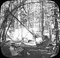 Herman Bohlman with a couple in a hammock (3945310205).jpg