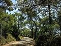 Heybeliada - panoramio (20).jpg