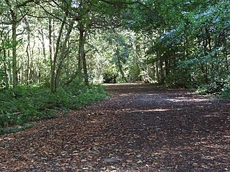 High Elms Country Park - Cuckoo Wood