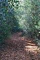 High Weald Way near Tutty Farm. - geograph.org.uk - 1056447.jpg