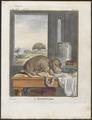 Hippopotamus amphibius - 1700-1880 - Print - Iconographia Zoologica - Special Collections University of Amsterdam - UBA01 IZ21900003.tif