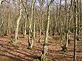 Hodgemoor Wood (2313631478).jpg