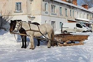 Sled - Horse-drawn sleigh. Ukraine, 2012