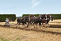 Horse Ploughing (3) (8069924585).jpg