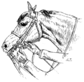 Horsemanship for Women 041.png
