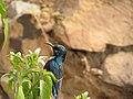 Humming Bird (1).jpg