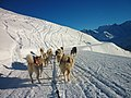 Huskies winter excursion at Verbier Ski Station - panoramio.jpg