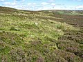 Hut circles and field systems - geograph.org.uk - 889505.jpg
