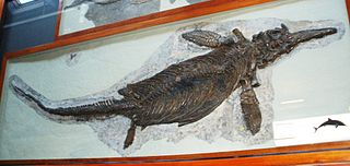 <i>Ichthyosaurus</i> genus of reptiles (fossil)