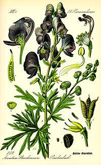 Illustration Aconitum napellus0.jpg