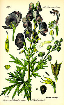 Illustration Aconitum napellus0.jpg