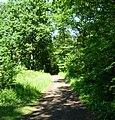 Im Mutterstädter Wald - panoramio (1).jpg