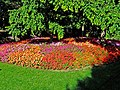 Impatiens in the Rotary Botanical Gardens.jpg