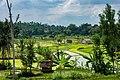Indonesia - Yogyakarta (26558440680).jpg