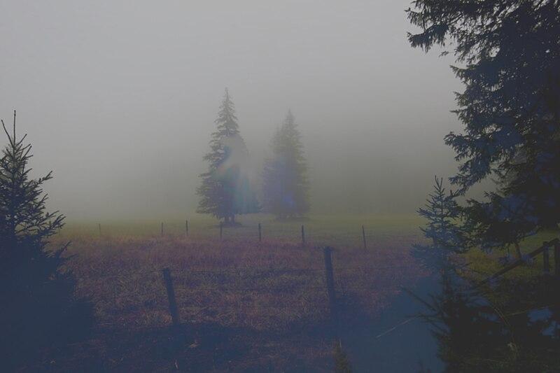 File:Inneres Pöllatal im Nebel.jpg