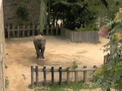 Fail:Insightful-Problem-Solving-in-an-Asian-Elephant-pone.0023251.s005.ogv