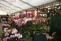 Internationale Orchideen- und Tillandsienschau Blumengärten Hirschstetten 2016 d.jpg