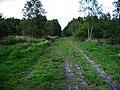 Iping Common, dusk - geograph.org.uk - 1441777.jpg
