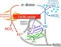 Iron+sulfate reduction.jpg