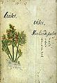 Japanese Herbal, 17th century Wellcome L0030052.jpg
