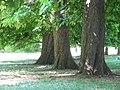 Jardin palais ducal parme 2.JPG