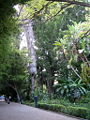 Jardinbotanicodevalencia300.JPG