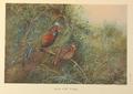 Javan Junglefowl by George Edward Lodge.png