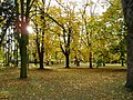 Jeseň v parku - panoramio.jpg