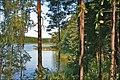 Jezioro Zyzdrój Wielki las - panoramio.jpg
