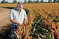 Joe Reed checks his red grain sorghum crop, near Edmonson, TX. (24486457154).jpg