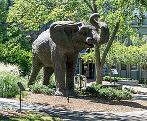 Barnum Museum of Natural History - Tufts Jumbo statue commemorating the site of the museum