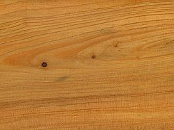 Juniperus communis wood tangent section 2 beentree.jpg