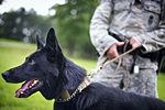 K-9 handlers, Pursuing the enemy 150729-F-IF940-075.jpg