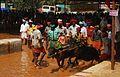 Kambula , Buffalo Race in Coastal Karnataka, Puttur Kambula.jpg