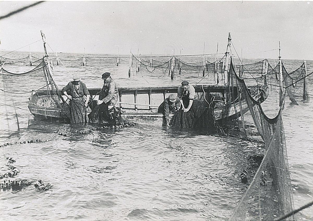 Kamer visserij wikipedia