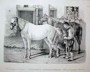 Karl Joseph Brodtmann - German draught horses by Brodtmann