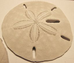 Keyhole sand dollar easy beach games for kids family office memories