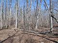 Kings Mountain National Military Park - South Carolina (8557773977) (2).jpg