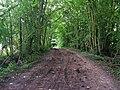Kingsdown Lane - geograph.org.uk - 537098.jpg