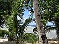 Kiribati(020).JPG