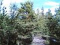 Kivikon ulkoilupuisto - panoramio.jpg