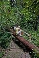 Ko Lanta Jungle-Hiking-Trail 4 - panoramio.jpg