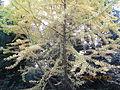Kobe Municipal Arboretum in 2013-11-16 No,5.JPG