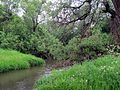 Koloch river at the bridge near the village of Borodino; westward; 2012-06-10.JPG
