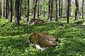 Koplipargi kivi. 16.jpg