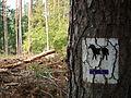 Kowanowko forests, gm. Oborniki (22).JPG