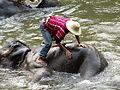 L'éléphant prend son bain.JPG