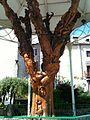 L'arbre - panoramio.jpg